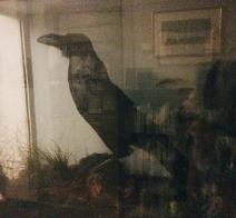 Charles Dickens's pet Raven Free Library Philadelphia