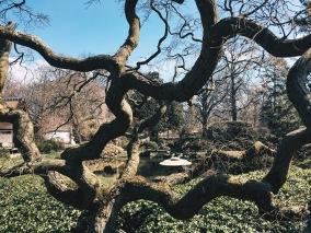 Gardens at Shofuso Philadelphia