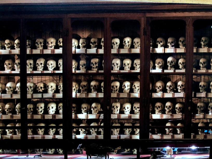 The Mutter Museum's wall of skulls