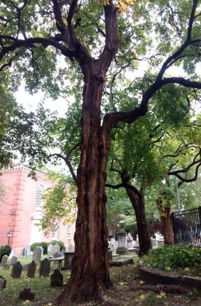 Lewis & Clark Trees St. Peters Philadelphia
