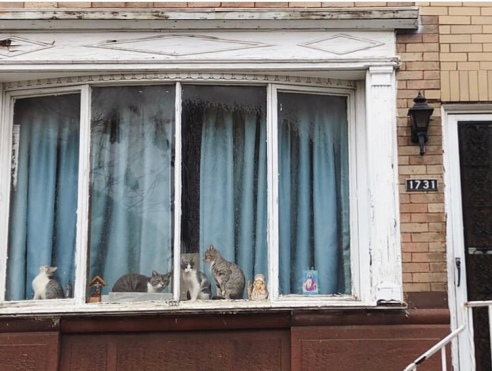 South Philly Window Cats